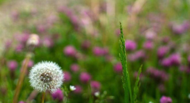 Heilpflanzen-Themenabende mit Karin Laschet -
