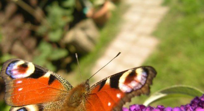 Natur- und Umweltschutz  -